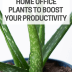 plant ideas for home office