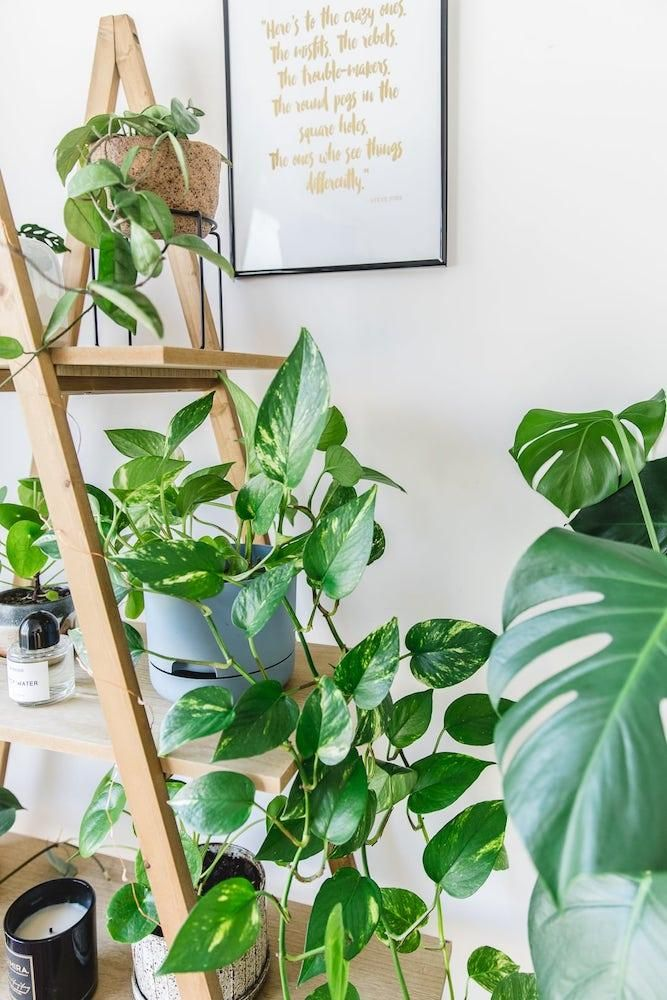 How-To-Care-For-Your-Pothos