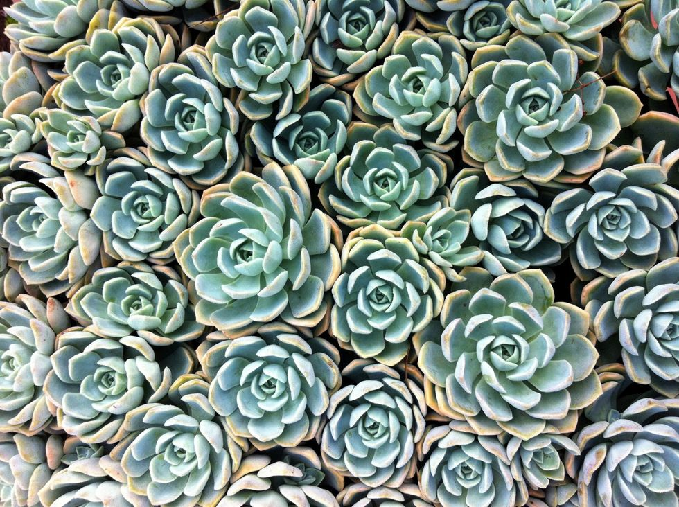 How-To-Care-For-Your-Succulents