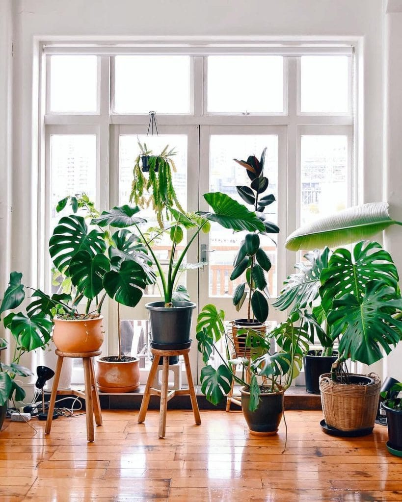 Increase-The-Humidity-For-Houseplants