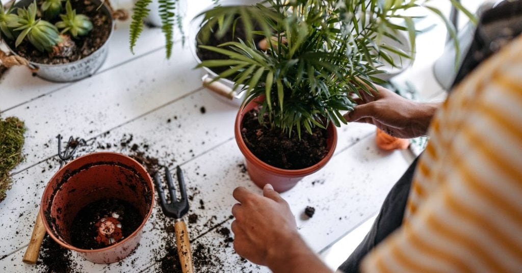How-To-Repot-A-Houseplant