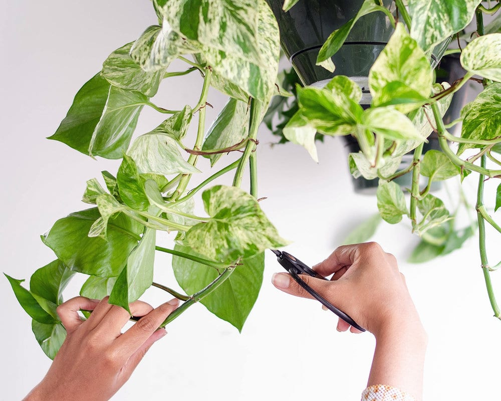 How-To-Trim-Your-Plants