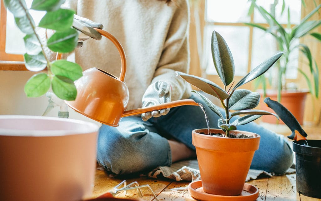 Care-Tips-For-Houseplants-In-The-Winter