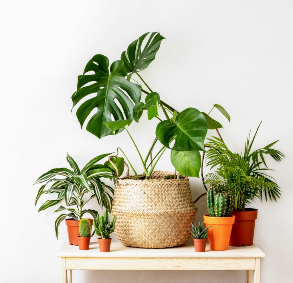 How-To-Get-Rid-Of-The-Common-Houseplant-Pests