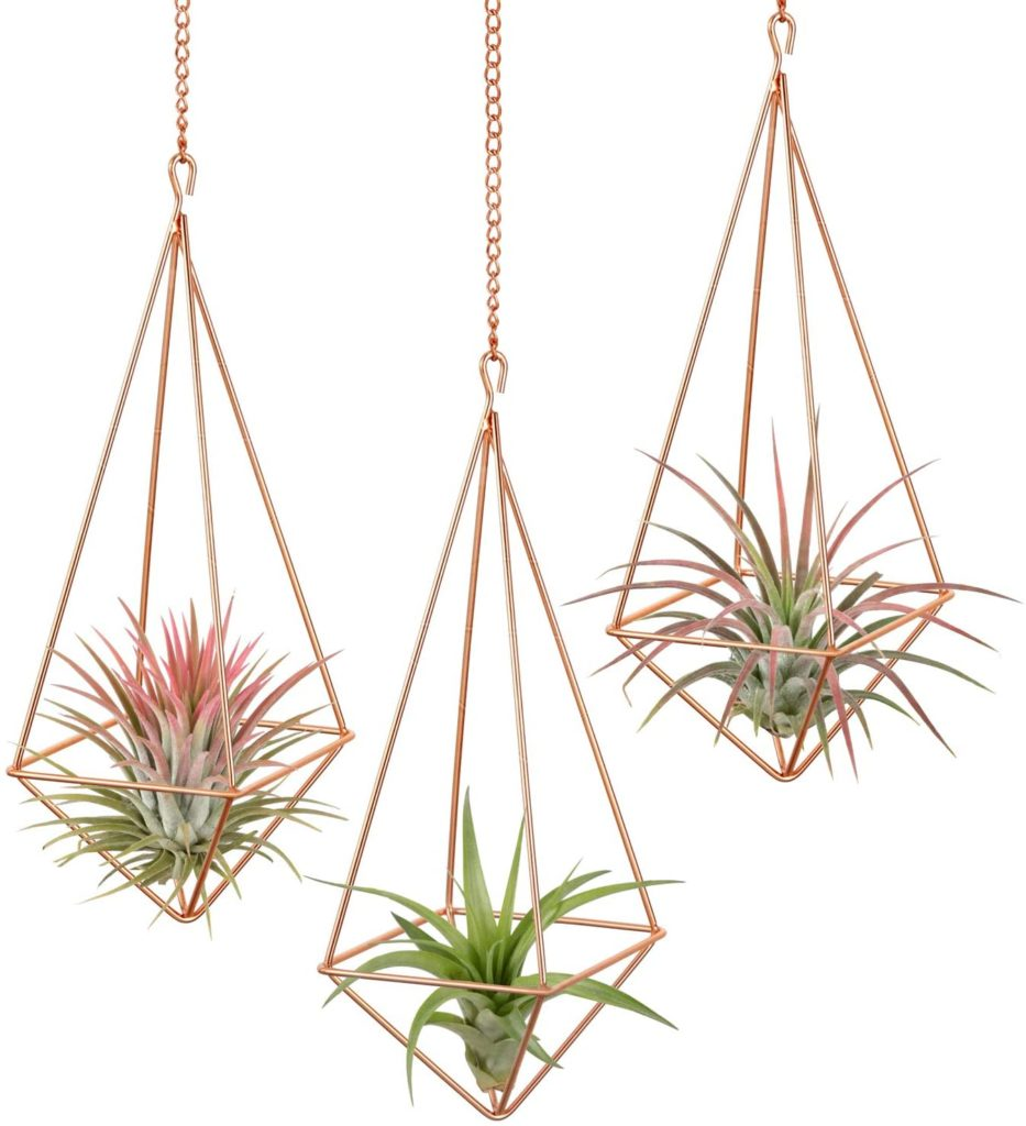 Indoor-Hanging-Plants