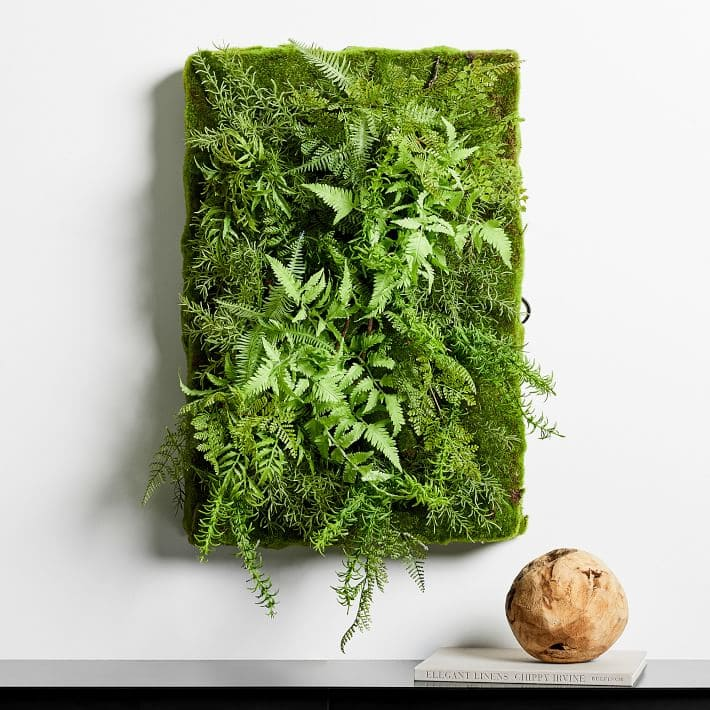 Plants-For-Your-Plant-Wall