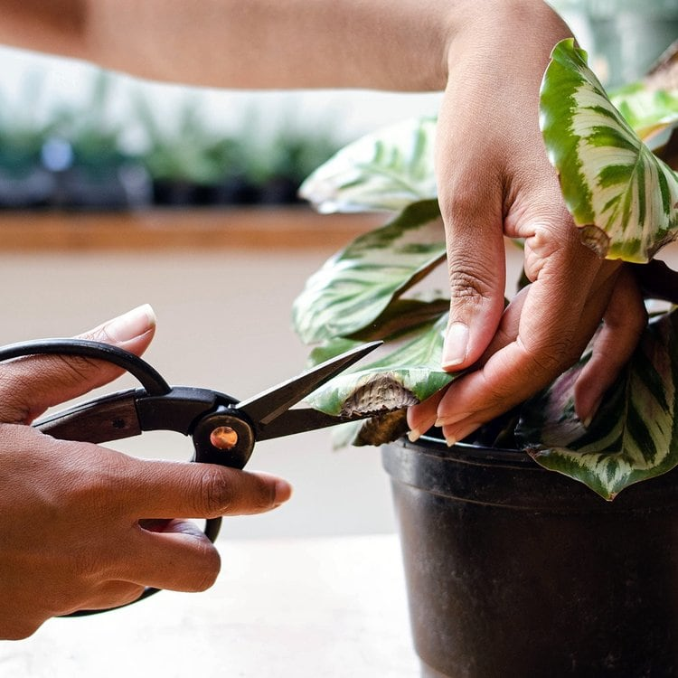 How-To-Save-A-Dying-Indoor-Plant