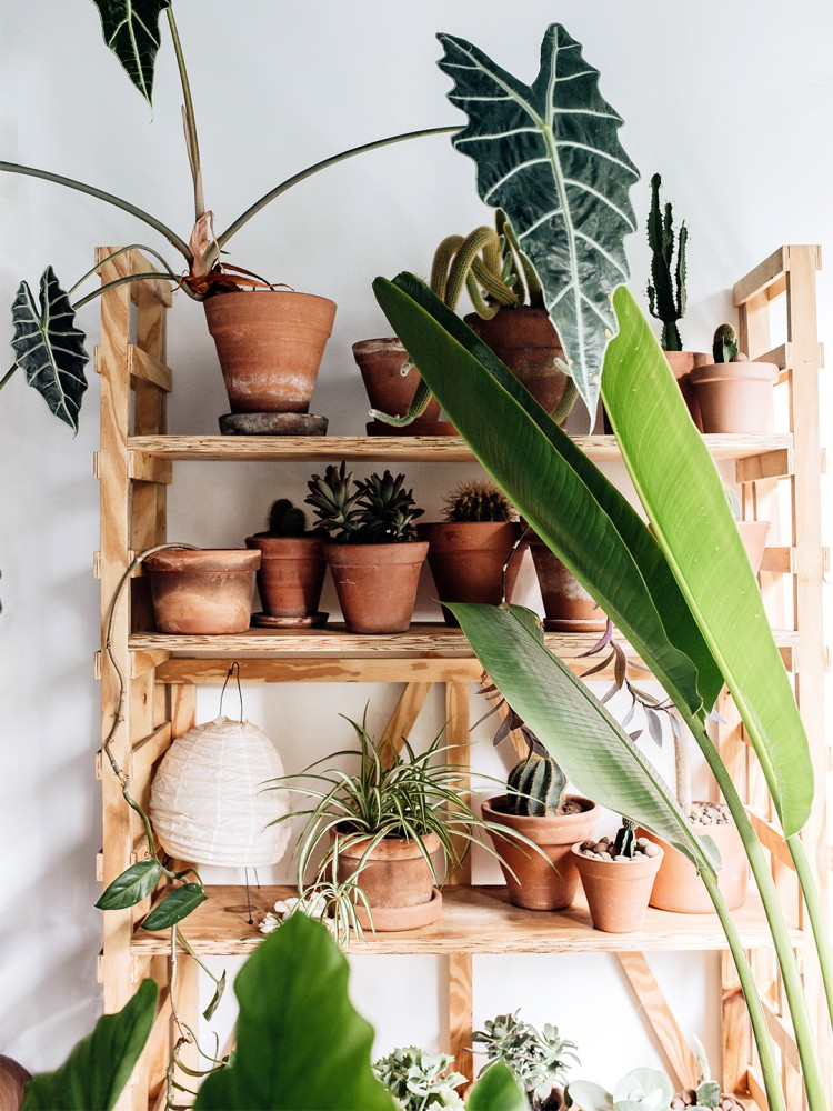 Container-Gardening-Mistakes