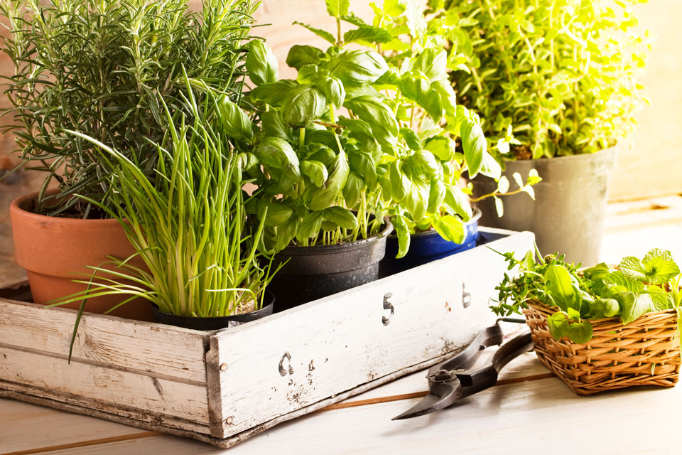 Indoor-Herb-Gardening-Tips