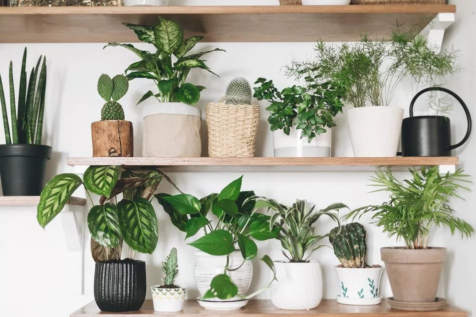 Reasons-To-Try-Container-Gardening