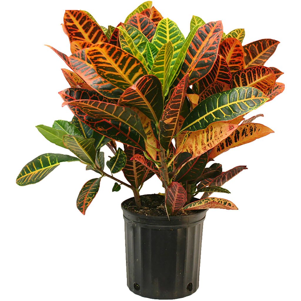 Colorful-Indoor-Plants
