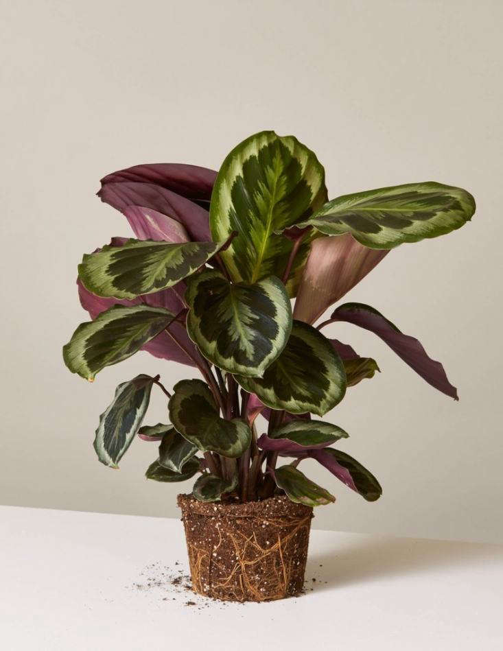 Houseplants-For-Kids