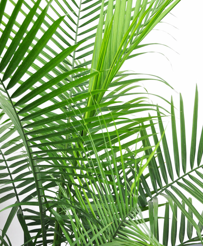 Houseplants-To-Help-Keep-Your-House-Cool
