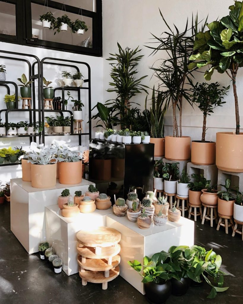 How-To-Care-For-Potted-Plants