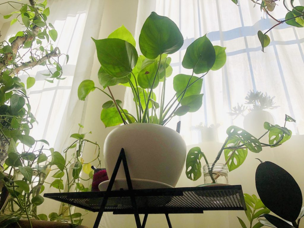 How-To-Keep-Plants-Alive-While-On-Vacation