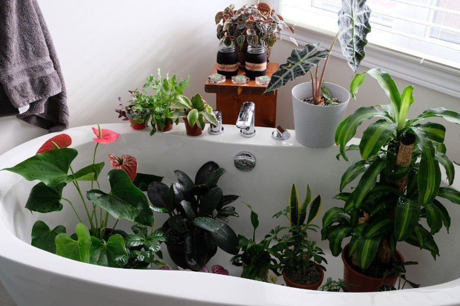 How-To-Water-Your-Plants-While-You-Are-Away