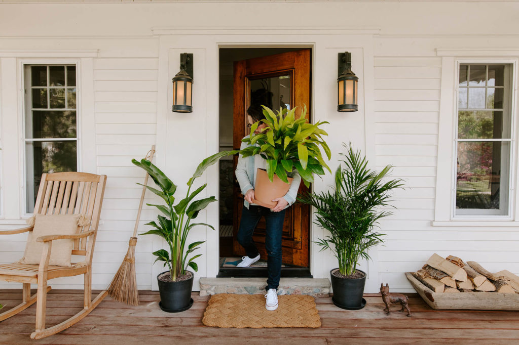 Summer-Plant-Care-Tips
