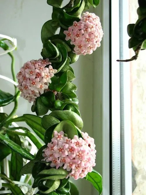 Most-Expensive-Houseplants