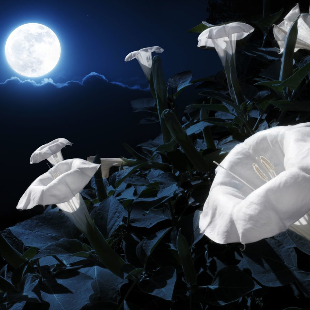 How-To-Plant-A-Moon-Garden