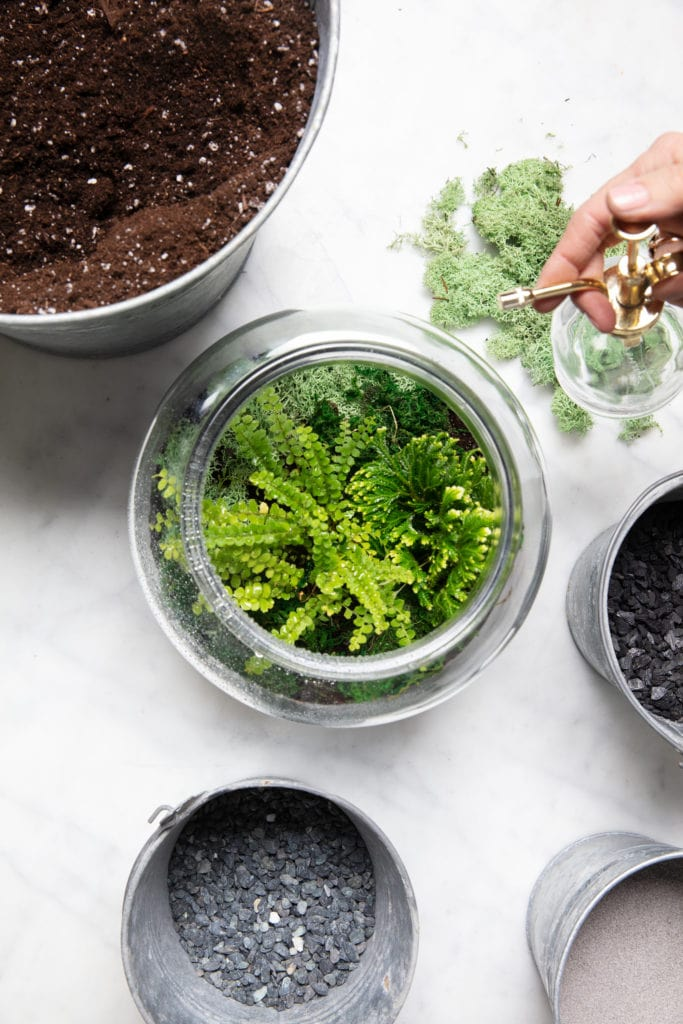 How-To-Keep-Plants-Cool-In-Summer
