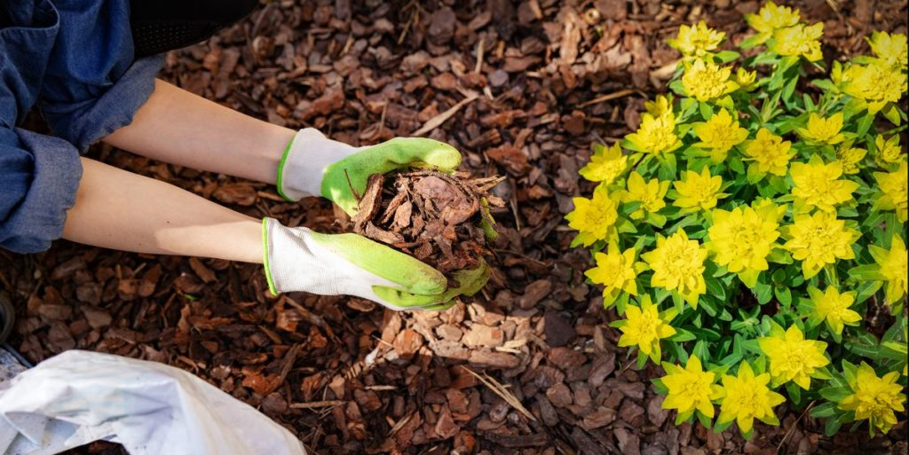 Protect-Your-Garden-From-Drought