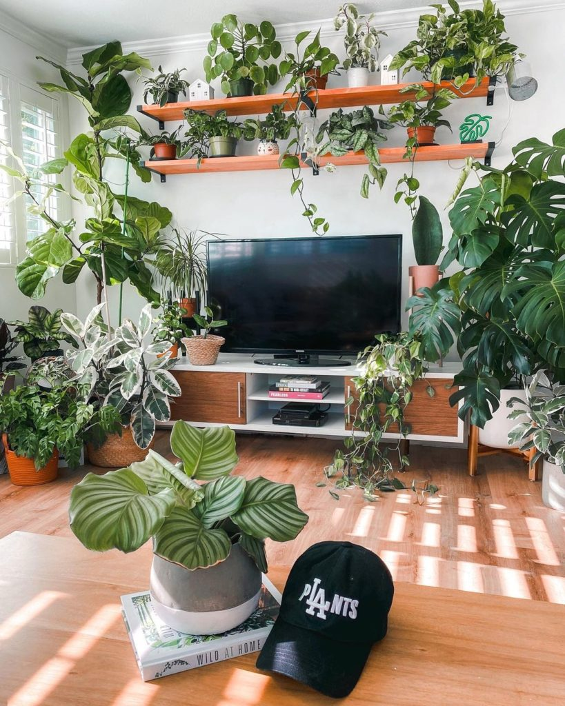 When to Bring Plants Indoors
