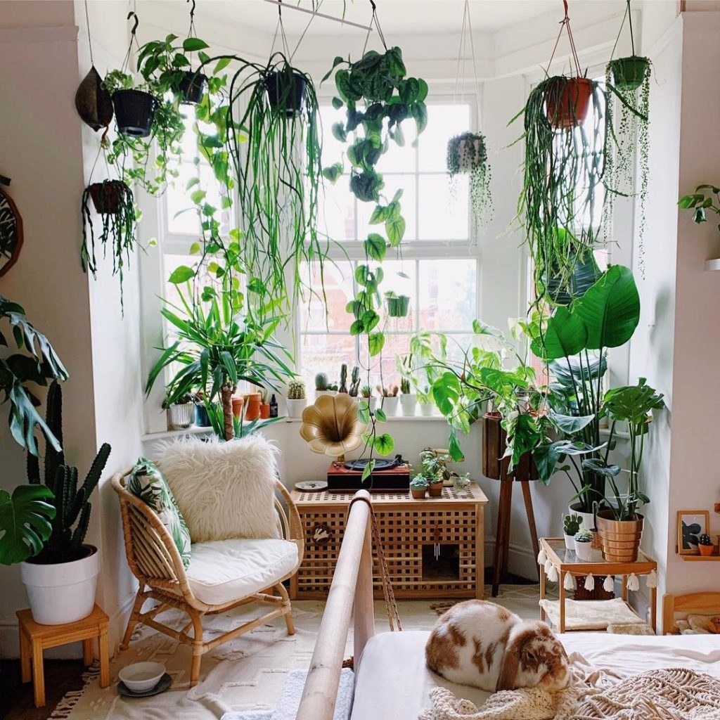 Ways-To-Pamper-Your-Houseplants