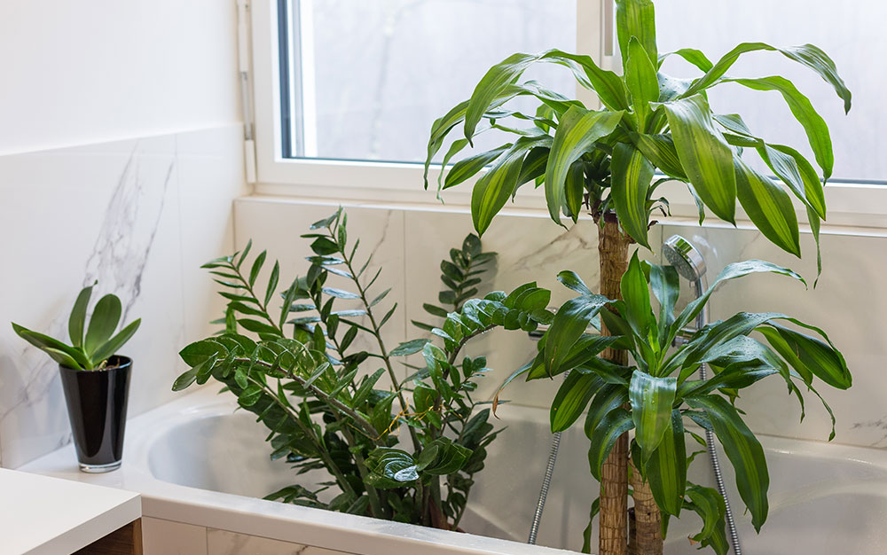 How-To-Flush-A-Plant