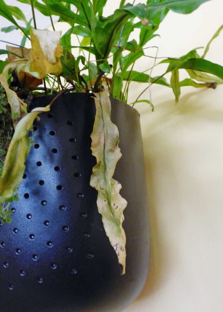 Signs You Are Underwatering Your Indoor Plant
