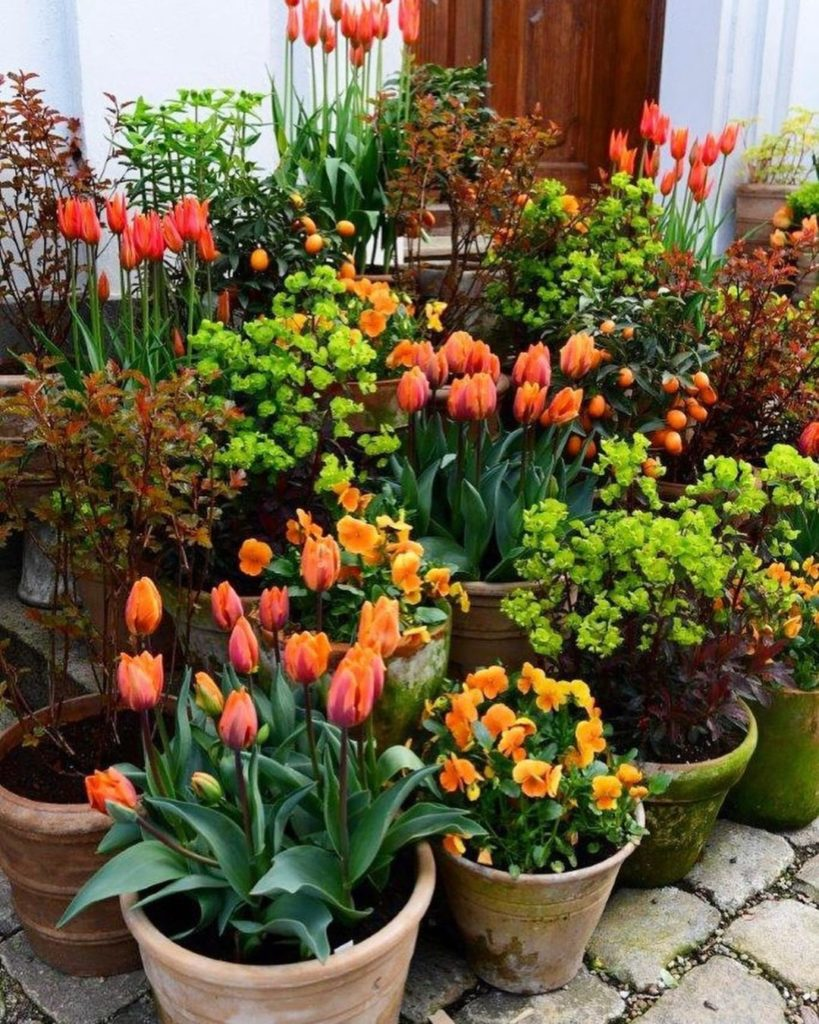 Fall and Winter Container Gardening Tips
