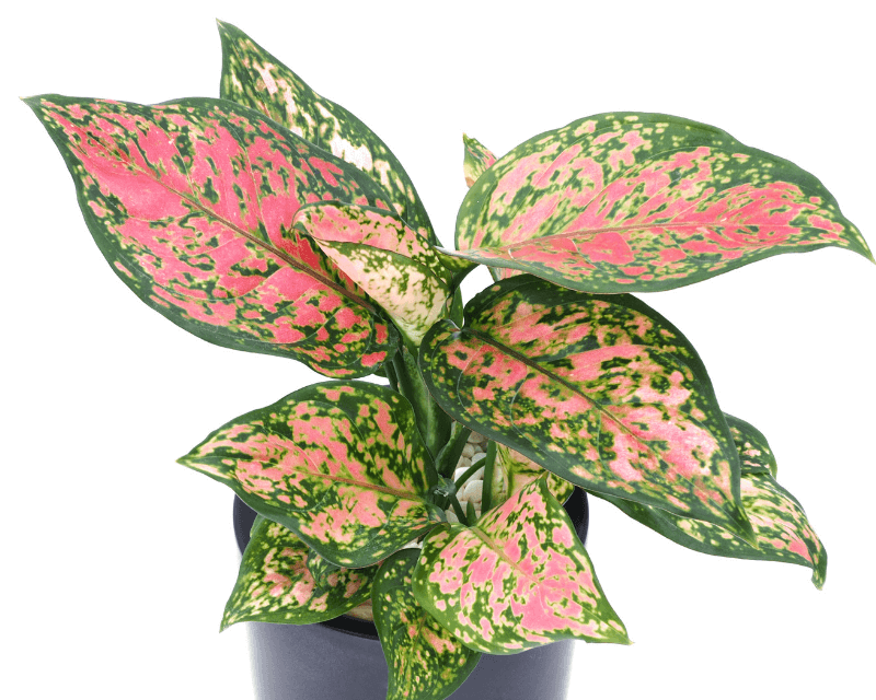 Houseplants to Decorate for Fall
