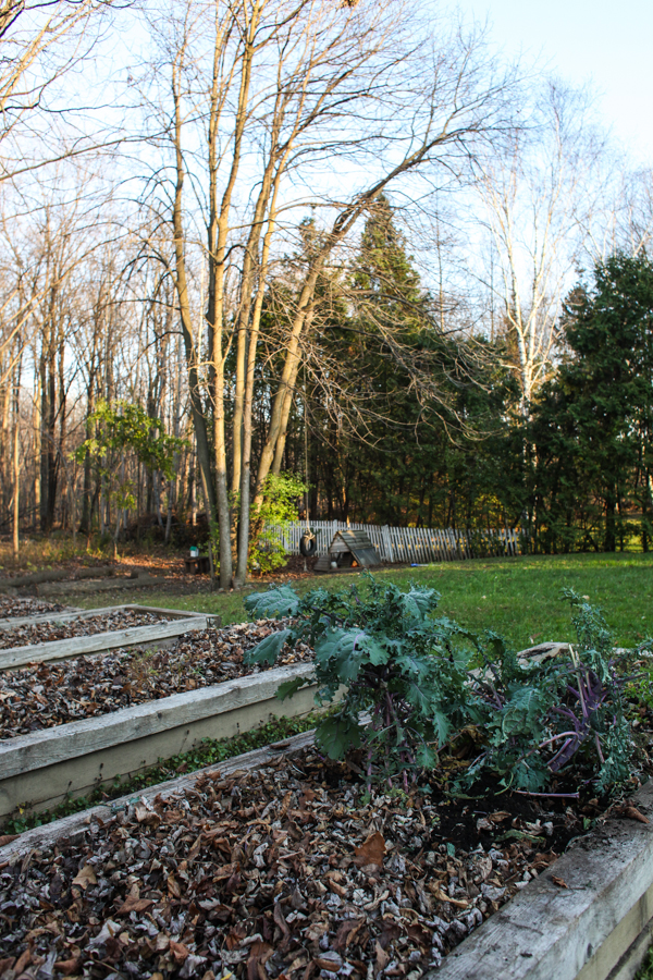 How to Protect Your Plants and Trees From the Late Fall