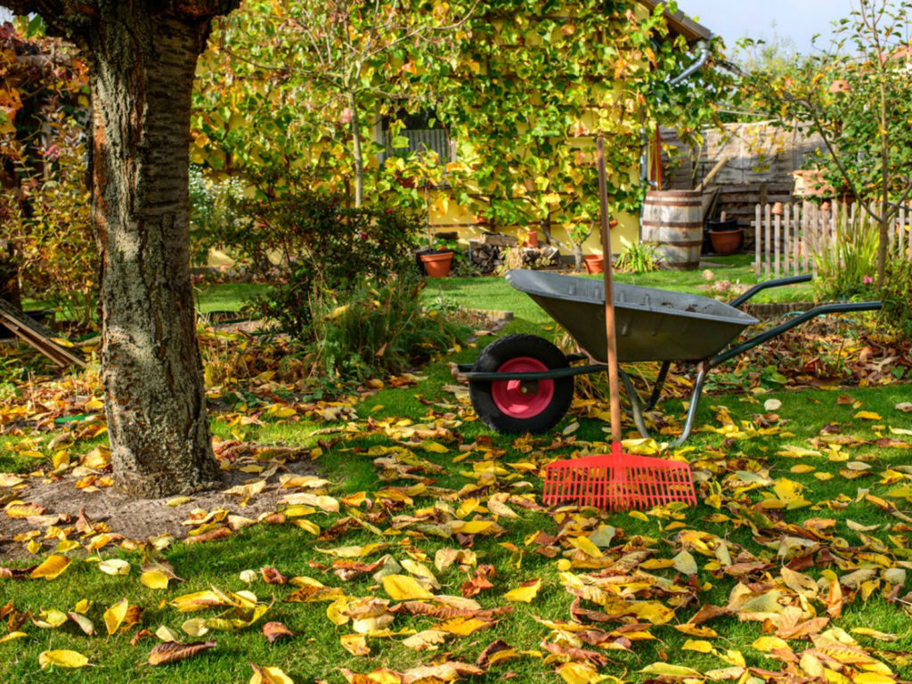 How to to Use Autumn Leaves