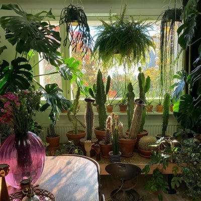 CREDIT: PLANTS AND COLLECTING