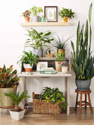 Air-Purifying Plants by Super Art Cane Furniture
