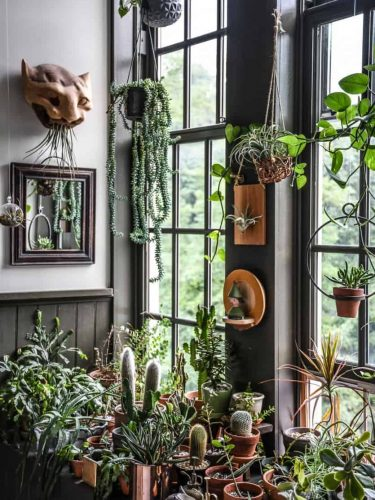 Best Houseplants by Coveteur