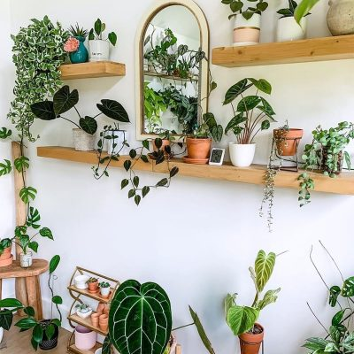 CREDIT: COURTESY OF FANCY PLANTS CHIC / DOMINO